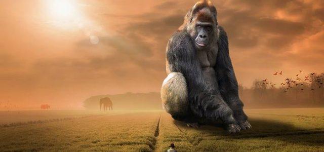 Michael Jawer – Μόνο οι άνθρωποι έχουν ψυχή, ή και τα ζώα;