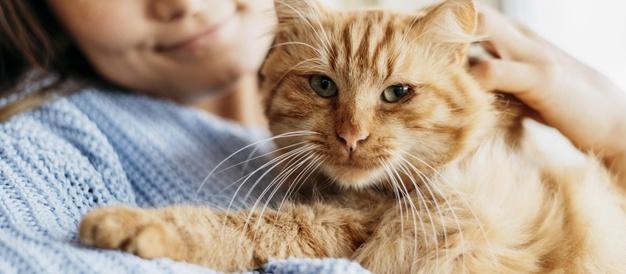 Πρώτη προφυλάκιση στην Ελλάδα για ζωοκτονία: 23χρονος έσφαξε γάτα στην Πάτρα