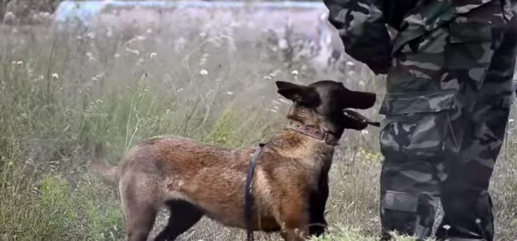 Καλούνται για «κατάταξη» στην Πολεμική Αεροπορία  23 στρατιωτικοί σκύλοι