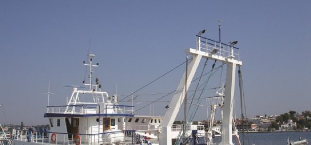 Πότε απαγορεύονται οι μηχανότρατες – οι όροι αλιείας για το συμιακό γαριδάκι