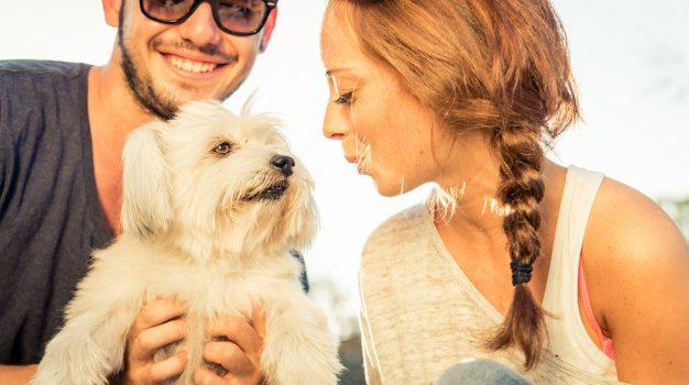 Σκύλοι, που μυρίζουν τον ιδρώτα, κάνουν το ντεμπούτο τους, ως ανιχνευτές του κορονοϊού