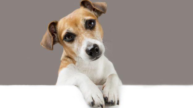 Ενημέρωση από το Tμήμα Διαχείρισης Ζώων Συντροφιάς Δήμου Σαλαμίνας