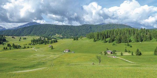 Κτηματολόγιο-Δασικοί Χάρτες: πώς σώζουνται με τις νέες ρυθμίσεις οι δασωμένοι αγροί