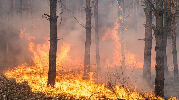 Περί τα 71.300 στρέμματα έκαψε η μεγάλη πυρκαγιά στα Γεράνεια, σύμφωνα με το meteo του Εθνικού Αστεροσκοπείου Αθηνών