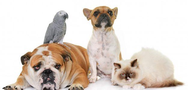 Περισσότερα από 40 φιλοζωικά σωματεία της Ελλάδας στηρίζουν το νομοσχέδιο για τα ζώα συντροφιάς