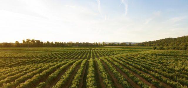 Τα αγροδιατροφικά προϊόντα στην «προμετωπίδα» των ελληνικών εξαγωγών