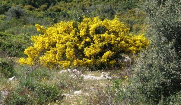 Δασικοί Χάρτες: «νάρκη» στις λύσεις του ΥΠΕΝ από την Ελληνική Δασολογική Εταιρία