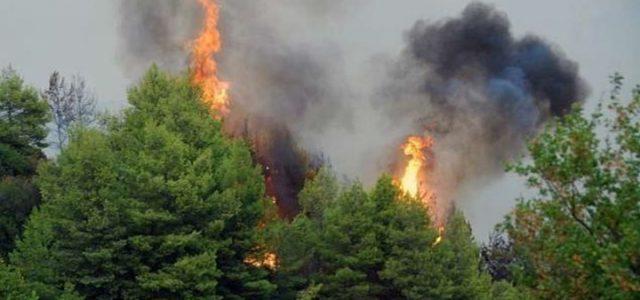 Πυρκαγιά σε δασική έκταση στην περιοχή Δρυμώνα Ελυμνίων Εύβοιας