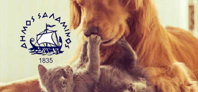 Ενημέρωση για την διαχείριση των αδέσποτων ζώων του Δήμου Σαλαμίνας για τον μήνα Ιούνιο 2021
