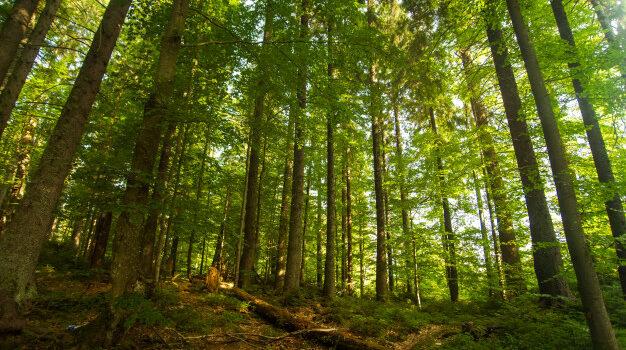 Η Προστασία των Δασών Είναι Υπόθεση ΟΛΩΝ ΜΑΣ!
