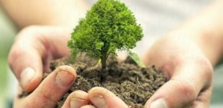 Το φύτεμα νέων δέντρων θα αυξήσει τις καλοκαιρινές βροχές στη νότια Ευρώπη, σύμφωνα με μελέτη
