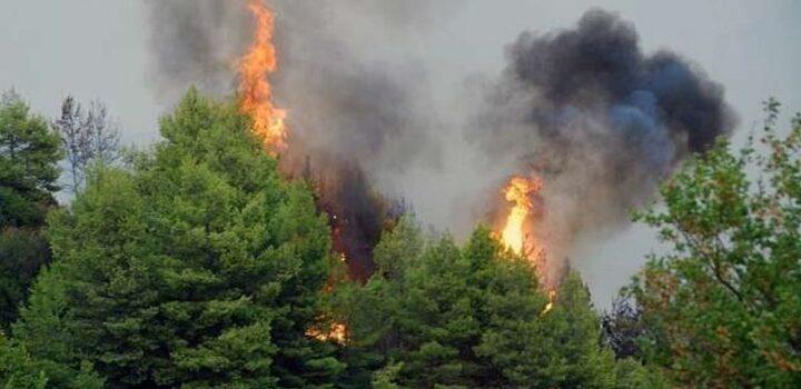 Πυρκαγιά στη Σταμάτα Αττικής, κοντά σε κατοικίες