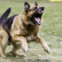 Δάγκωμα Σκύλου: Πως Πρέπει Να Το Αντιμετωπίσετε