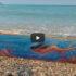 Διαδικτυακή υποβρύχια έκθεση ζωγραφικής από τον Στέλιο Καγιαδάκη