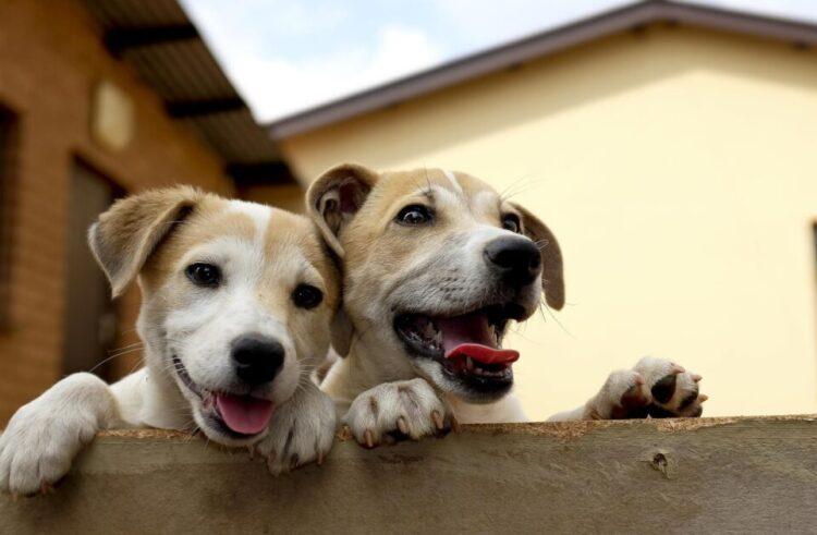 Κατοικίδια ζώα συντροφιάς. Πόσα κατοικίδια επιτρέπονται σε κατοικίες