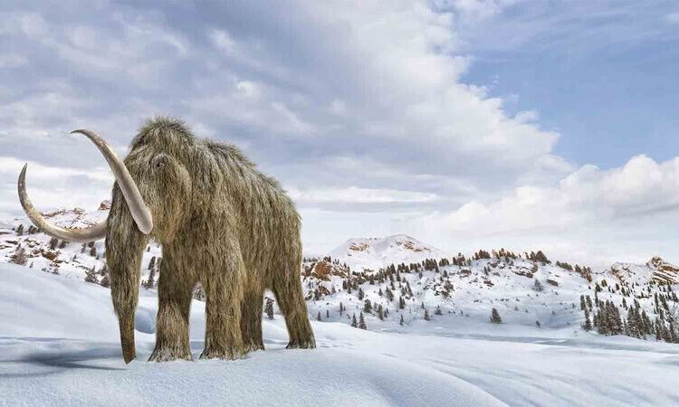 Επιστήμονες θέλουν να αναστήσουν το μαλλιαρό μαμούθ